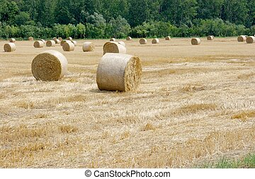 Agriculture - Agricultural field with dry haybails