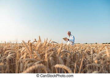 agriculture, essai, grain, champ, scientifique, données, recherche, poursuite