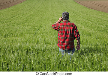 Agriculture, farmer examining wheat field - Farmer or ...
