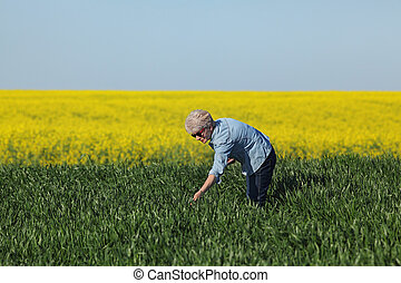 Agriculture, farmer examining wheat field with rapeseed plants in background