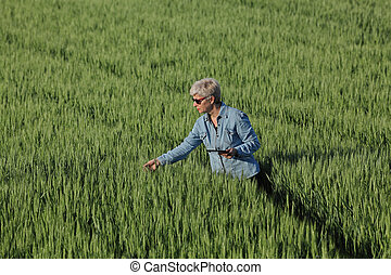 Agriculture, farmer examining wheat plant in field