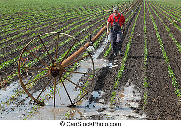 Agriculture, farmer in paprika field with watering system