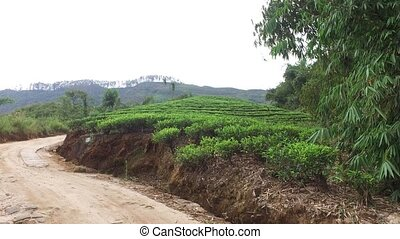 road and tea plantation field on Sri Lanka - agriculture,...