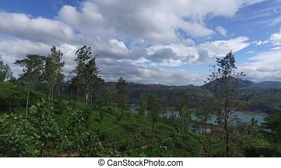 tea plantation hills on Sri Lanka - agriculture, farming and...