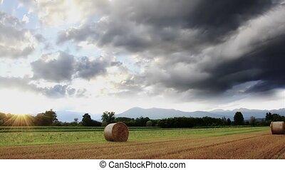 hay bales - Agriculture, farmland. Landscape with hay bales.