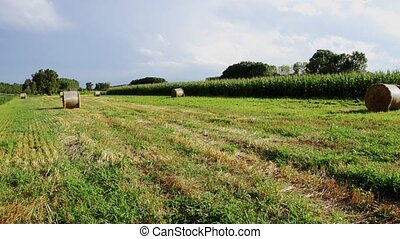 hay bales - Agriculture, farmland. Landscape with hay bales.