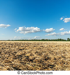 agriculture field after harvesting and clouds in blue sky over it
