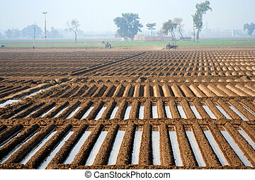 Agriculture field in Pakistan - Field in the rural part of ...