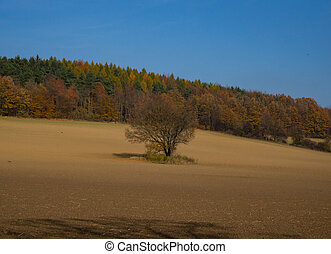 Agriculture field in spring and blue sky