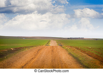 Agriculture field