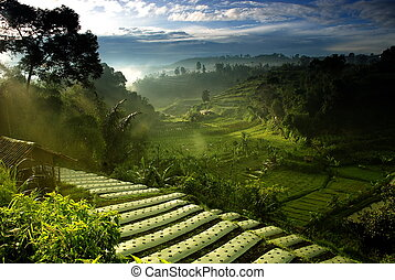 Agriculture Field - Agriculture field with beautiful green...