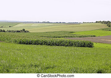 agriculture fields