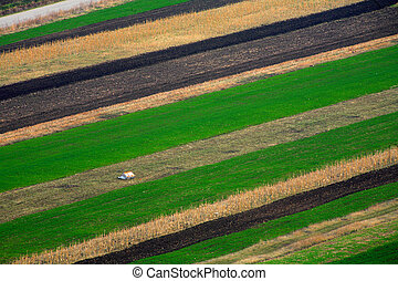 Agriculture - Fields near Rimetea village, Romania