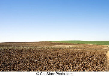 agriculture fields under deep blue sky
