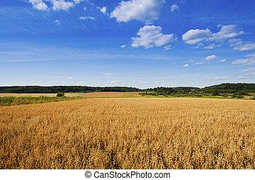 agriculture, finlandais