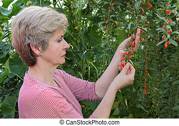 Agriculture, woman agronomist holding goji berry fruit in hands, healthy eating