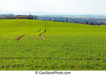 Green agricultural field in a rural area
