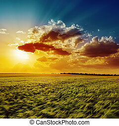 agriculture green field and orange sunset