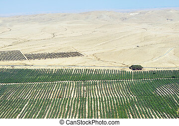 Agriculture - Growing in the Desert
