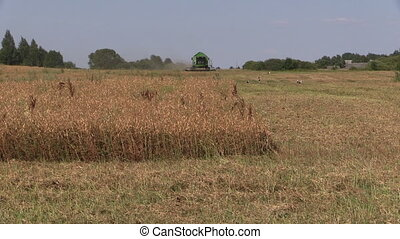 agriculture harvest works - Combine harvest field and dry...