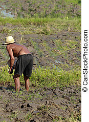 agriculture, homme