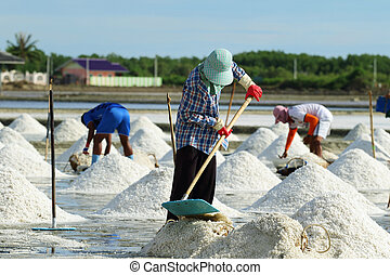 salt farm - Agriculture in Thailand, Workers working in the...