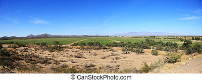 Agriculture in the desert
