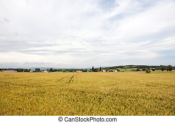 French agriculture landscape with mowing the grass.