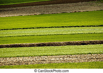 Agriculture layers - fields and meadows