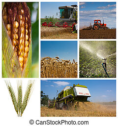 High relolution Montage or collage of agricultural images