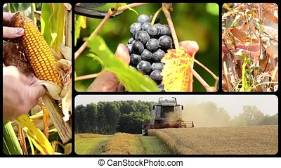 Agriculture montage - The harvest, collage