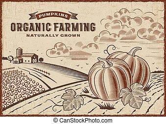 agriculture, organique, paysage, citrouille