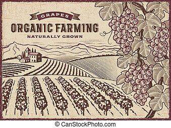 agriculture, organique, raisins, paysage