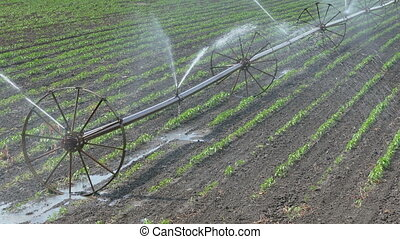 Agriculture, paprika field watering - Irrigation system for...