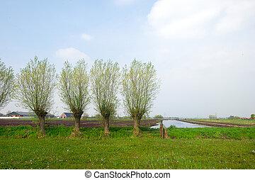 agriculture, paysage, hollandais