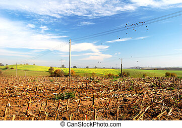 agriculture, paysage