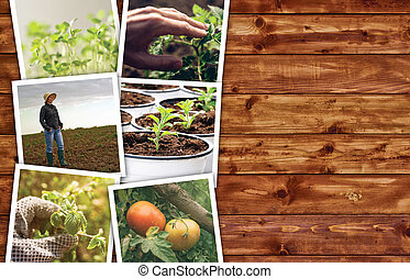 Agriculture photo collage