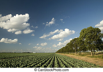 agriculture and windmills