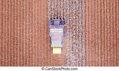 agriculture, plant., récolte, combine., grand, coton, field., cueilleur, fonctionnement