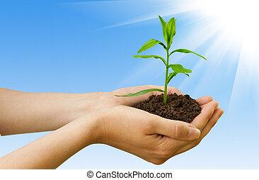 agriculture., planta, em, um, mão