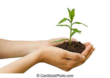 agriculture., plante, dans, a, main