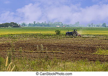 Agriculture plowing tractor on wheat cereal fields, agriculture in asia