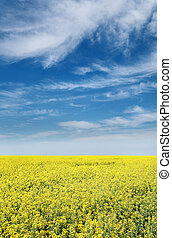 Agriculture, rapeseed - Colorful yellow oil rape in field ...