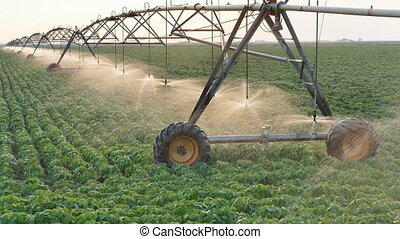 Agriculture, soybean field watering