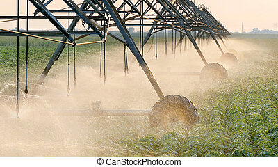 Agriculture, soybean field watering system in sunset