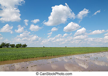 Agriculture - Natural disaster, flooded wheat field in...