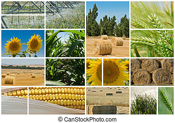 Agriculture. - Collage made of photos about agriculture.