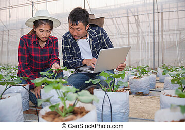 Agriculture technology concept man Agronomist Using a Laptop in an Agriculture Field read a report, Plant analysis and research