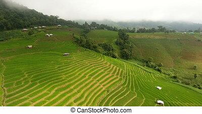 agriculture, terrasse riz, land., champ, montagne