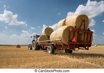 Agriculture - tractor on the field with harvested corn in haystack